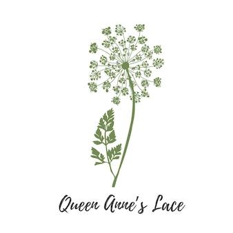 Rainha anna laço flor vetor vetor flor selvagem verde