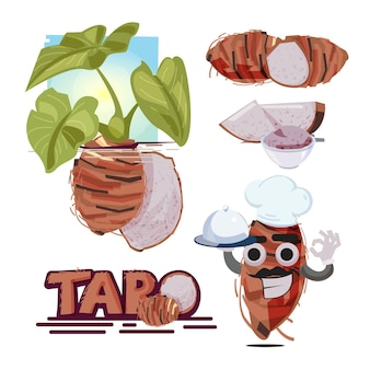 Raiz de taro. planta taro. fruta e fatia de taro.