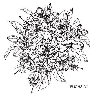 Ramalhete da ilustração fúcsia do desenho da flor.