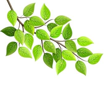 Ramo com folhas verdes frescas. conceito de eco.