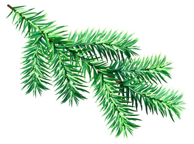 Ramo de abeto verde isolado em fundo branco, símbolo de natal e ano novo