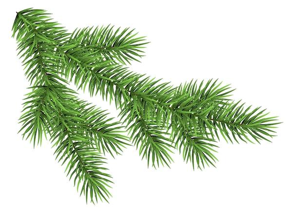 Ramo de abeto vermelho isolado no fundo branco. abeto verde. árvore de natal realista. projeto de vetor para cartões de natal, cartazes de festa de ano novo.