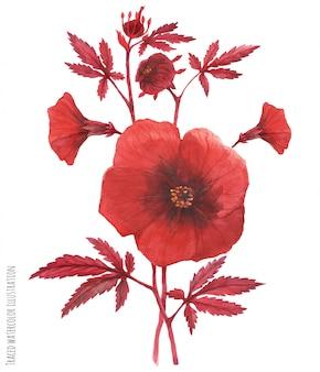 Ramo de acetosella de hibisco vermelho