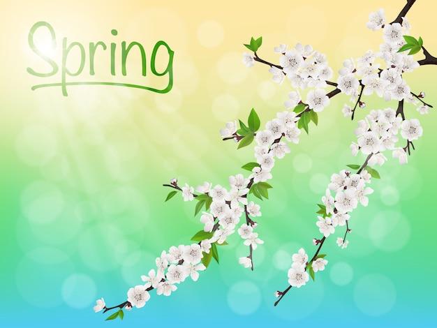 Ramo de cerejeira florescendo primavera