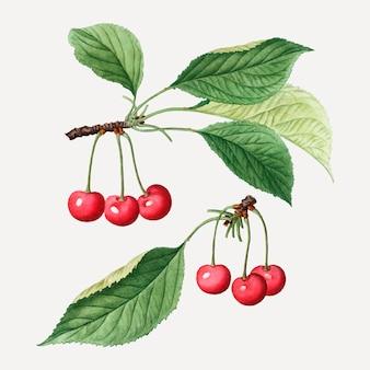 Ramo de cerejeira