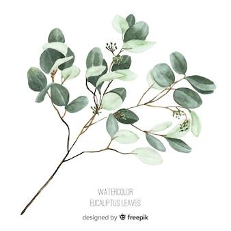 Ramo de eucalipto em aquarela