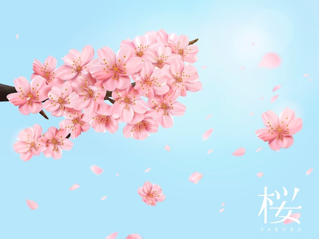 Ramo de flor de cerejeira e flores voadoras no céu azul brilhante na ilustração, flor de cerejeira em japonês à direita