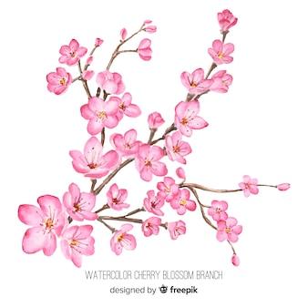 Ramo de flor de cerejeira em aquarela