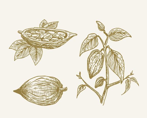 Ramo de grãos de cacau de vetor de mão desenhada com folhas esboço sillhouettes definir coleção de rabiscos de planta ...