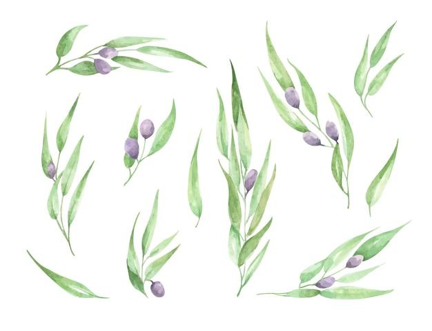 Ramo de oliveira em aquarela com folhas e frutas ilustração floral