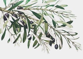 Ramo de oliveira em um cartão de Natal