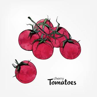 Ramo de tomate cereja, mão desenhada ilustração aquarela colorida.
