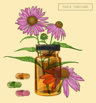 Ramo e flor roxa coneflower