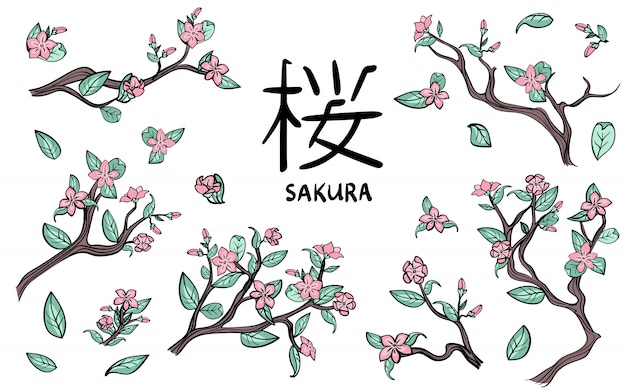 Ramos de flores de cerejeira. flores de sakura rosa. conjunto de ilustração, em branco.