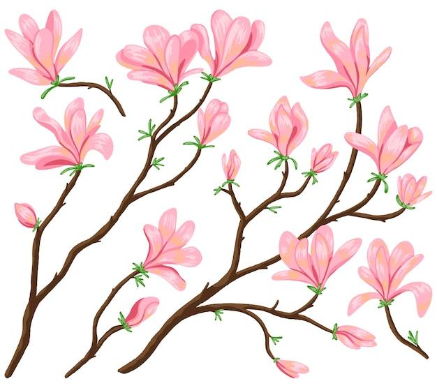 Ramos de magnólia florescendo ilustração vetorial desenhada de mão. coleção botânica da temporada de primavera. desenho vintage colorido isolado no branco. elementos suaves para design.
