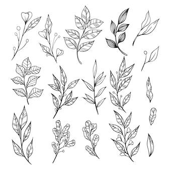Ramos de mão desenhada com coleção de folhas. elementos decorativos para decoração