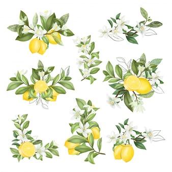 Ramos de mão desenhada e composições de galhos de árvores de limão florescendo