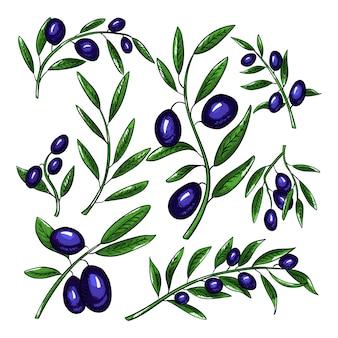 Ramos de oliveira com conjunto de frutas.