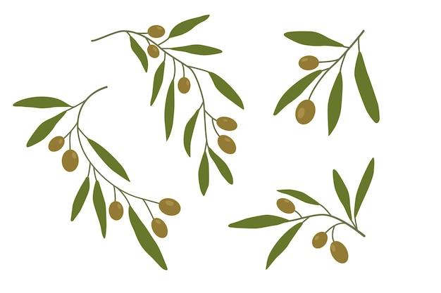 Ramos de oliveira definidos primeiro galhos de árvores de azeitonas folhas verdes ilustração vetorial