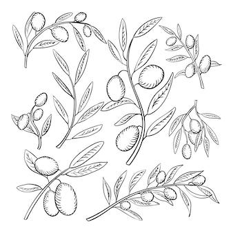 Ramos de oliveira desenhados à mão com folhas