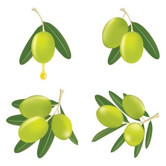 Ramos de oliveira verde