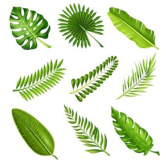 Ramos de palmeira tropical
