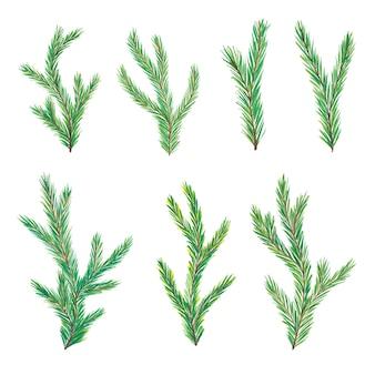 Ramos de pinheiro em aquarela. ramos de árvore. mão desenhada aquarela ramos de abeto isolados