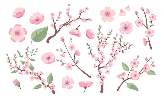 Ramos de sakura florescendo