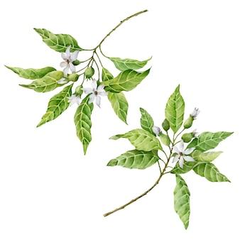 Ramos de vetor com flores aquarela ilustração de elementos florais isolados no branco