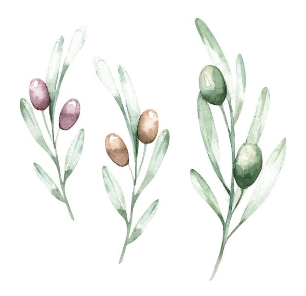 Ramos decorativos em aquarela de oliveira.