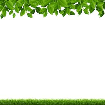 Ramos e grama verdes