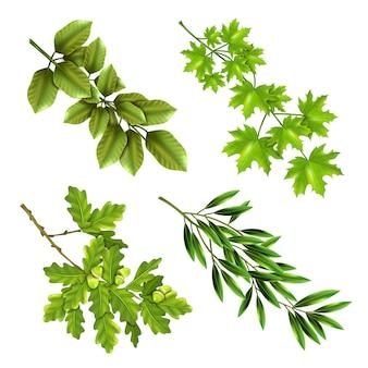 Ramos verdes de árvores de folha caduca