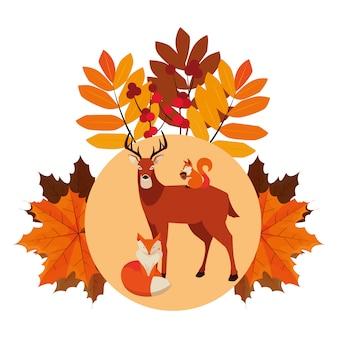 Raposa de veado e esquilo feliz temporada de outono