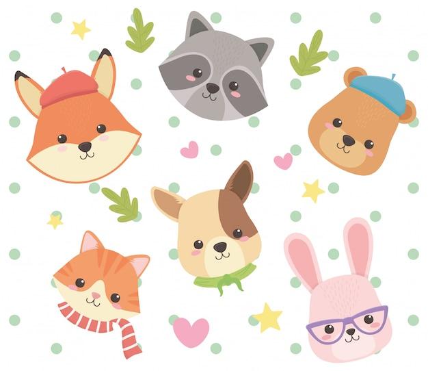 Raposa gato, urso guaxinim, cão, e, coelho