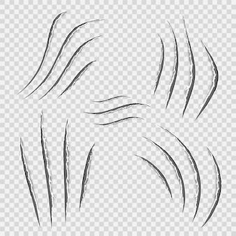 Rastro de raspar animal de garras realistas pretas. gato tigre arranha a forma da pata. rastreamento de quatro pregos. pano danificado. bordas irregulares. fundo transparente. isolado. ilustração vetorial.