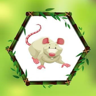 Rato branco em moldura de bambu