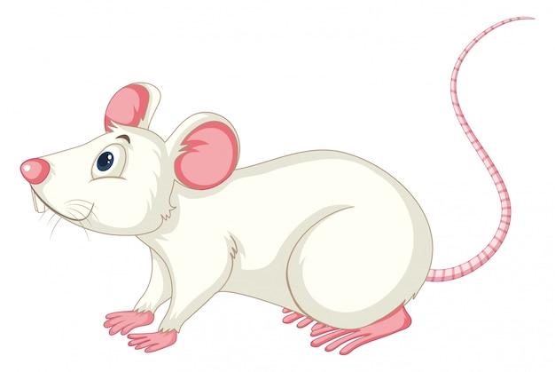 Rato branco sobre branco