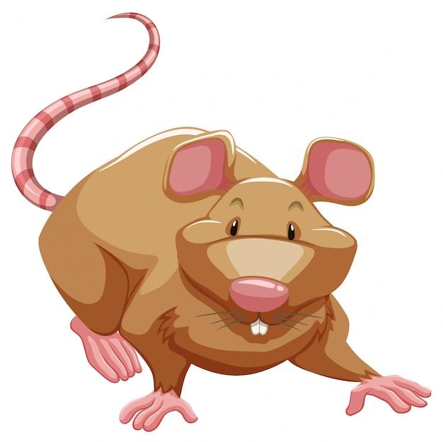 Rato brincalhão