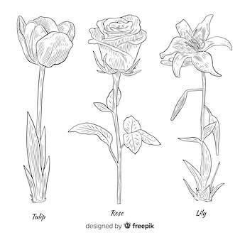 Realista mão desenhada close-up de coleção de flores botânicas