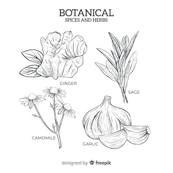Realista mão desenhada especiarias e ervas botânicas