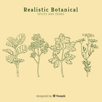 Realista mão desenhada especiarias e ervas esboços coleção