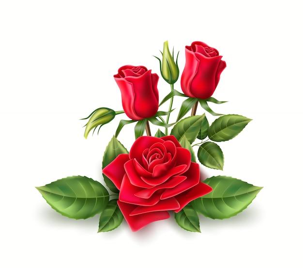 Realista rosa vermelha elegante buquê com folhas verdes