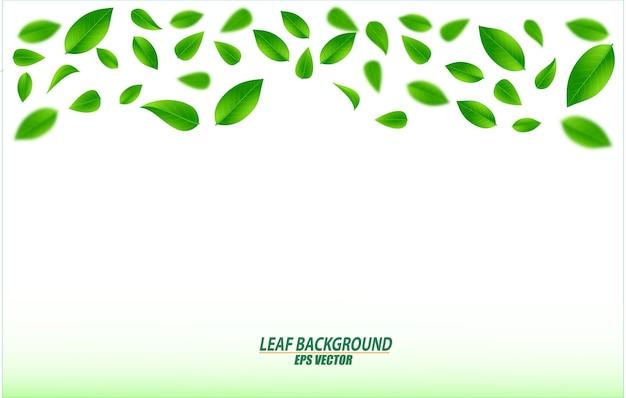 Realista voador folhas verdes fundo borrado folha fresca fundo verde conceito ecológico