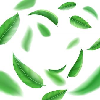 Realistas folhas verdes frescas sobre fundo branco, chá e ervas