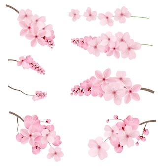 Realístico sakura ramo árvore mock ups