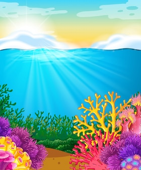 Recife de coral sob o mar