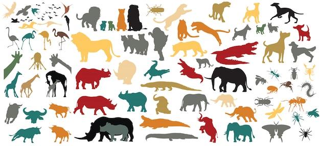 Recolha de animais isolada no fundo branco