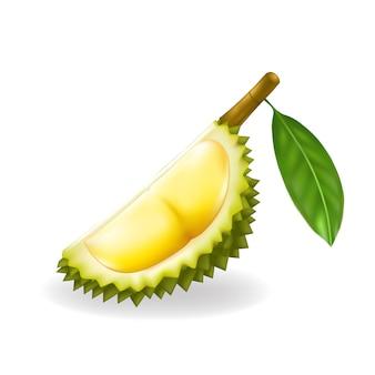 Rei das frutas, ilustração durian
