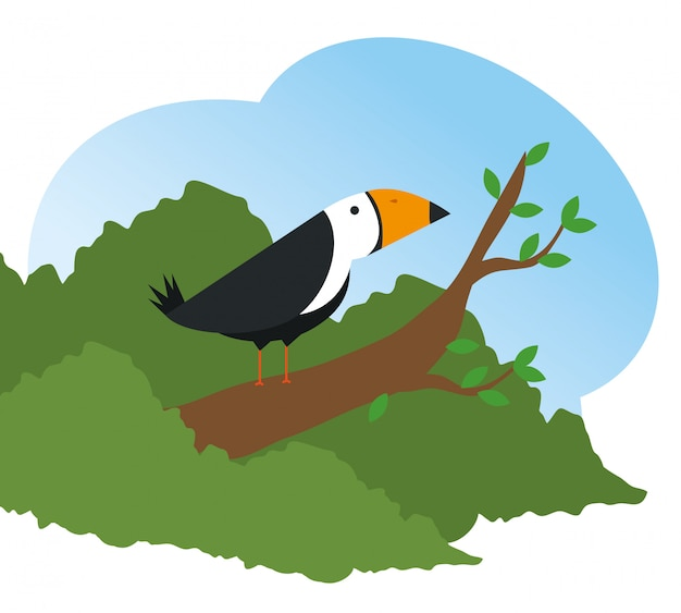 Reserva de animais selvagens de pássaro bonito