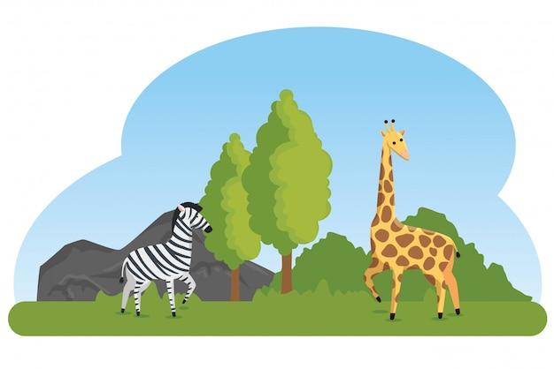Reserva de animais selvagens de zebra e girafa